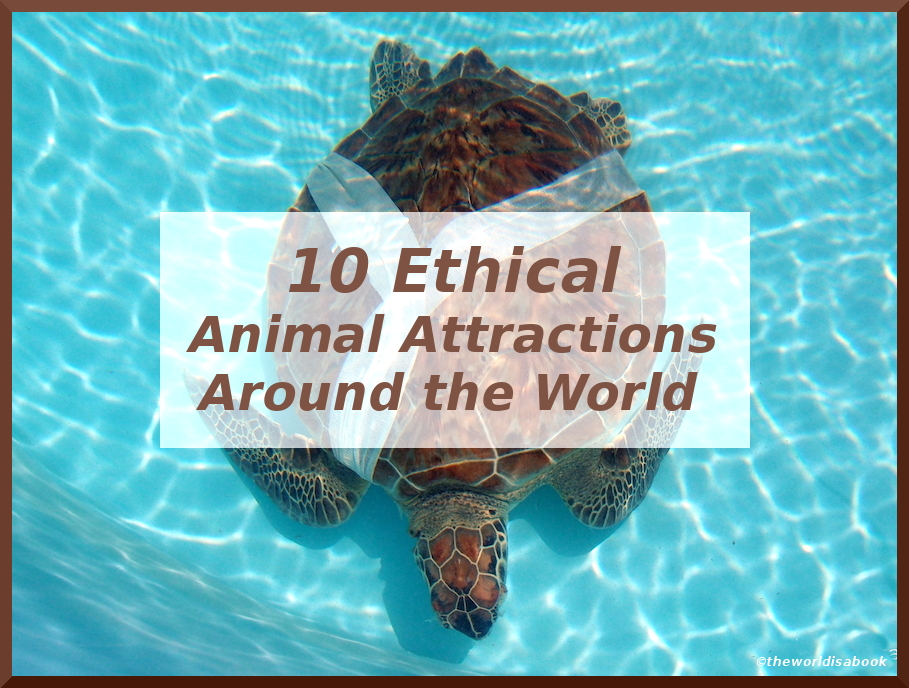10 Ethical Animal Attractions Around the World