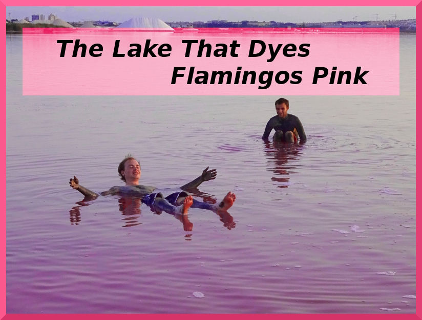 the lake that dyes flamingos pink